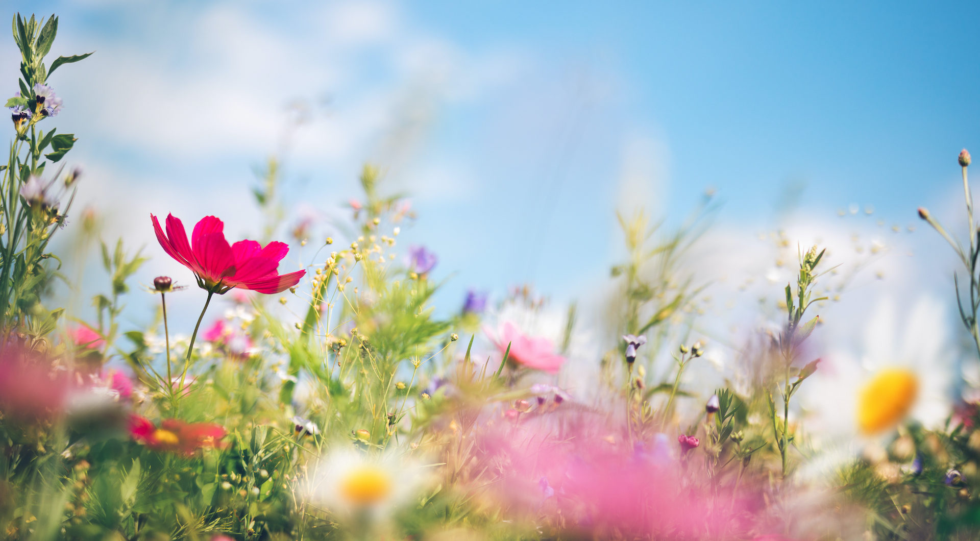 Spring Wildflower Header