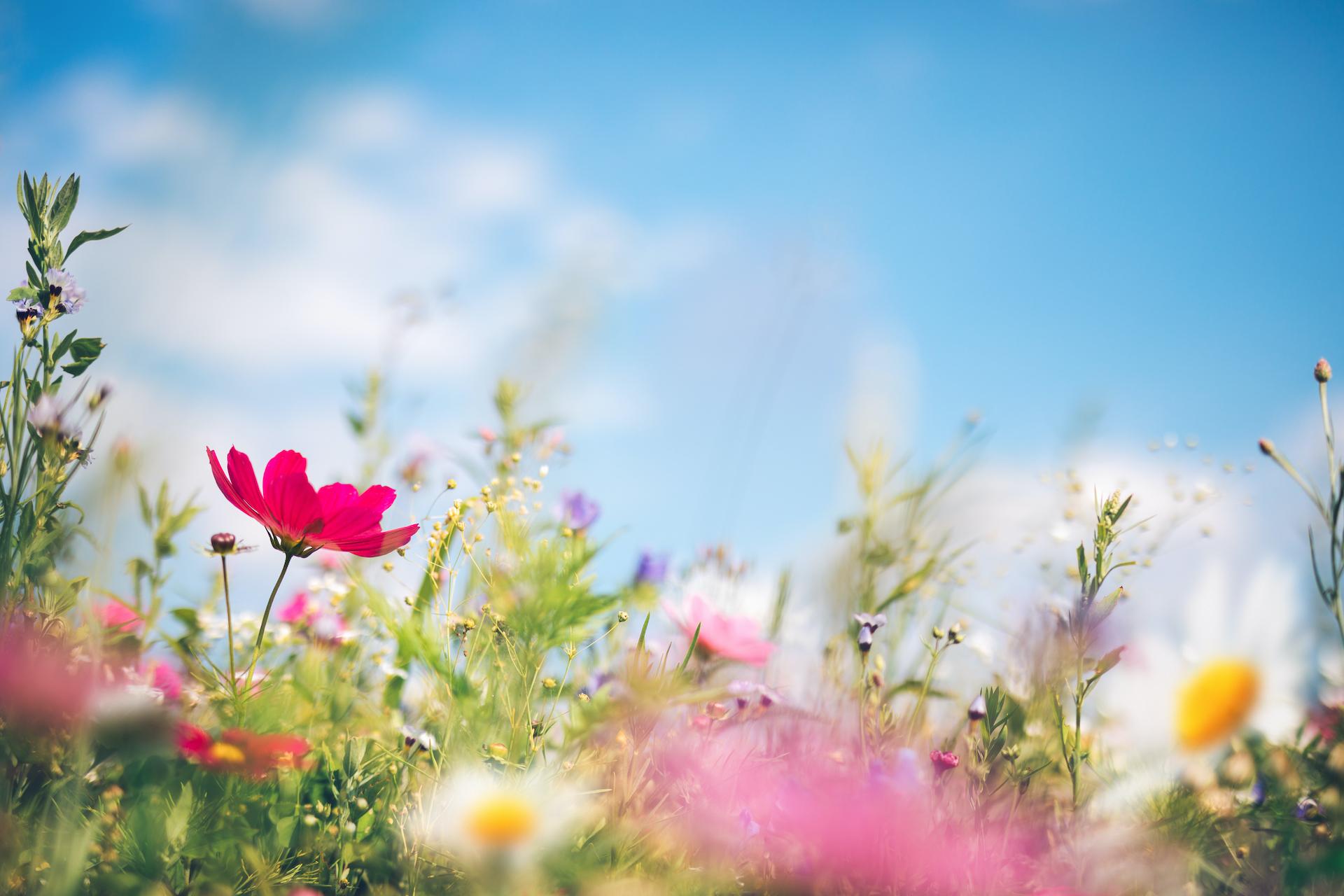 Spring Wildflower Header